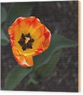 Spring Flowers No. 10 Wood Print