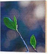 Spring In Bloom Wood Print by Linda Unger