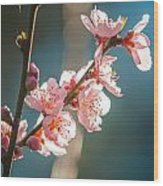 Spring Peach Tree Blossom Wood Print