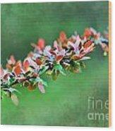 Spring Raindrops On Leaves - Digital Paint Wood Print