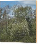 Spring Renewal Wood Print