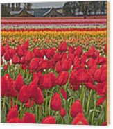 Springtime Tulip Field Art Prints Wood Print