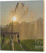 Sprinkler Irrigation Wood Print