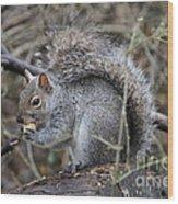 Squirrel With Peanut Wood Print