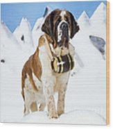 St. Bernard Dog Wood Print