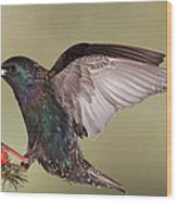 Stanley The Starling Wood Print