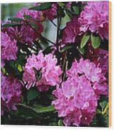 Still Life At North Puffin - Rhododendron With Butterfly Wood Print