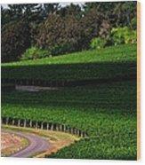 Stoller Vineyard Roads 19050 Wood Print
