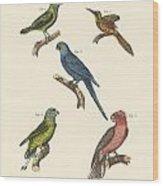 Strange Climbing Birds Wood Print