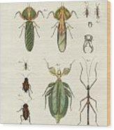 Strange Insects Wood Print