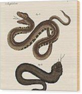 Strange Snakes Wood Print