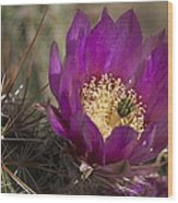 Strawberry Hedgehog Flower Wood Print