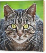 Stray Cat Stare Wood Print
