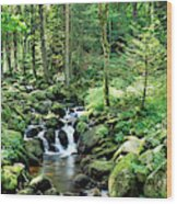 Stream Flowing Through A Forest, Usa Wood Print