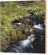 Stream In Mountain Wood Print