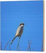 The Lookout Shrike Or Butcher Bird Art Wood Print