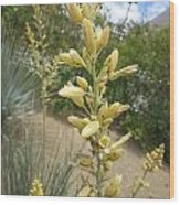 1 String Flowers    Photographed Las Vegas May 2014 Wood Print