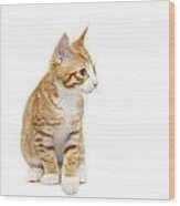 Stripy Ginger Kitten Sitting Down Wood Print