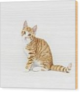 Stripy Red Kitten Sitting Down Wood Print