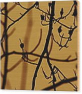 Structure Wood Print