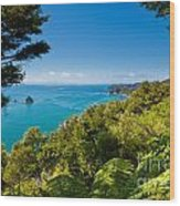 Subtropical Forest Of Abel Tasman Np In New Zealand Wood Print