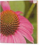 Summer Cone Wood Print