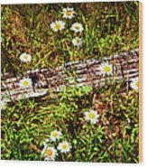 Summer Flowers On The Blue Ridge Parkway 7653 Wood Print