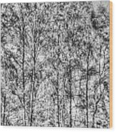 Summer Forest Trees Wood Print