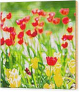 Sun Drenched Tulips - Featured 3 Wood Print