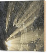 Sunbeam Wood Print
