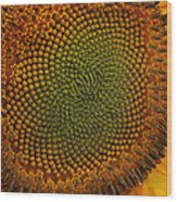 Sunflower Closeup Wood Print