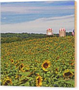 Sunflower Field New Jersey Wood Print