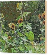 Sunflower Garden Wood Print by Annette Allman