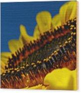 Sunflower Macro Wood Print
