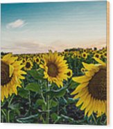 Sister Sunflowers Wood Print
