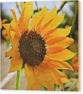 Sunflower With Texture Wood Print