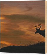 Sunset Buck Wood Print