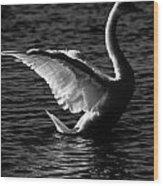 Swan Wingspan Wood Print