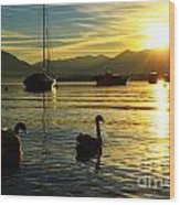 Swans In Sunset Wood Print