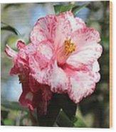 Sweet Camellia Wood Print