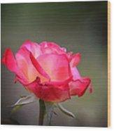 Sweet October Rose Wood Print