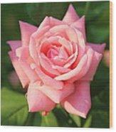 Sweet Pink Rose Wood Print by Carol Groenen