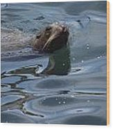 Swimming Sea Lion Wood Print