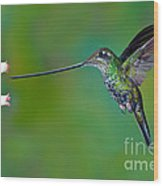 Sword-billed Hummingbird Wood Print