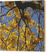 Tabebuia Tree Blossoms Wood Print