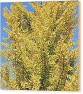 Tall Ginkgo Tree Wood Print