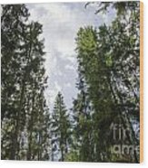 Tall Spruce Trees Wood Print