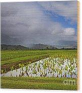 Taro Storm Wood Print