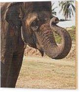 Temple Elephants Maharaja's Palace India Mysore Wood Print