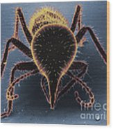 Termite Soldier Wood Print by David M. Phillips